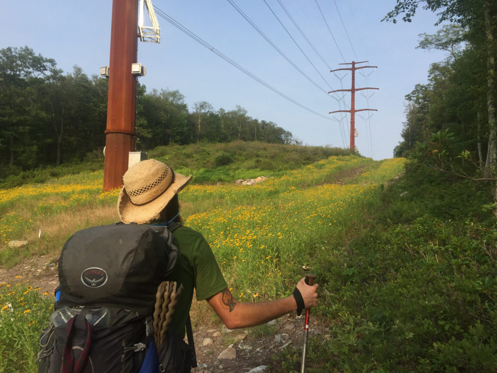 cheesebeardhikes on the appalachian trail