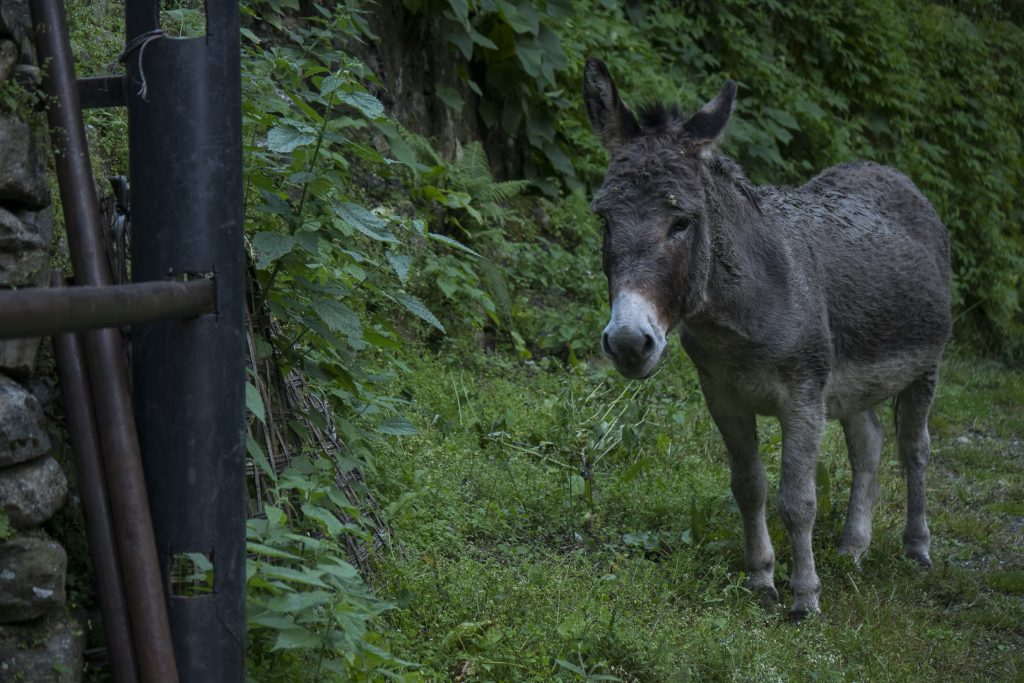 sad looking donkey